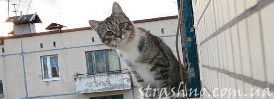 кот на фасаде дома