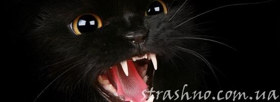 злой чёрный кот