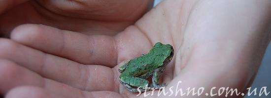 лягушонок в руке