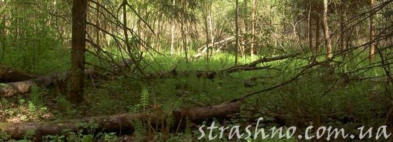поваленное дерево в лесу
