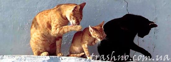 Мистические коты