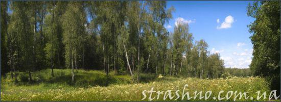 лесная поляна для пикника