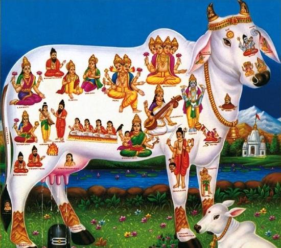 корова сурабхи