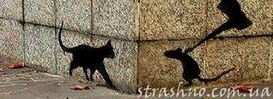 тень кошки и мышки