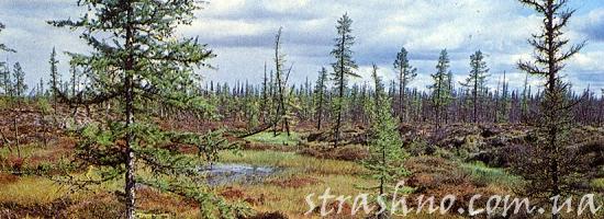 болото в якутии