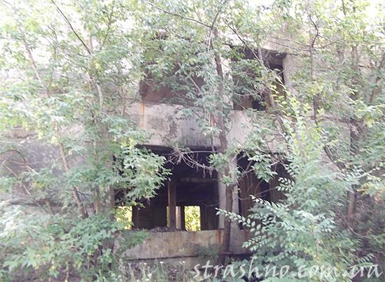 Здание, разрушаемое растениями