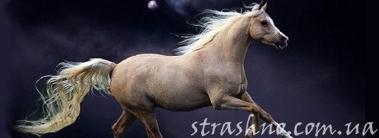 белый конь в ночи
