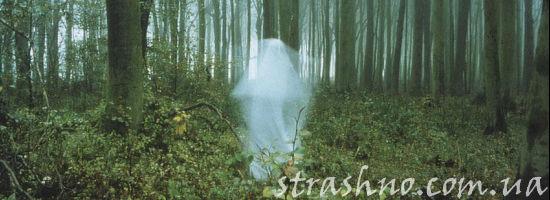 белый призрак в лесу
