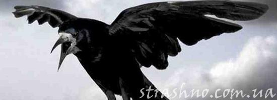 чёрный ворон