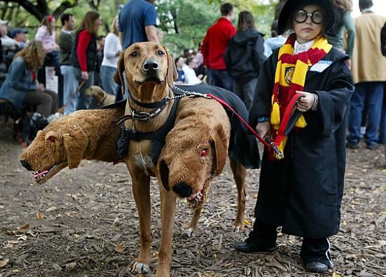 Костюм Гарри Потера с трёхглавым псом