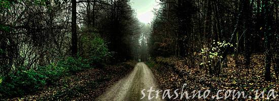 Мрачная дорога в лесу