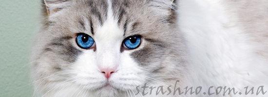 обиженный кот