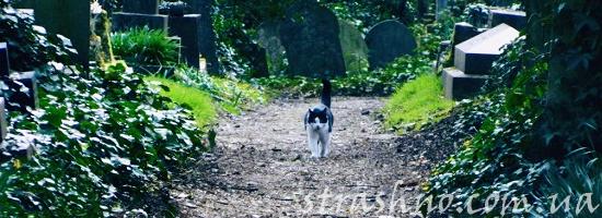кот на кладбище