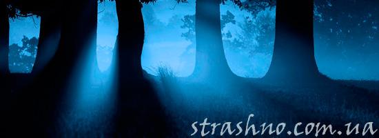 Кошмарный лес