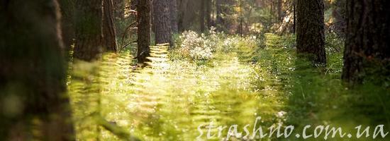 лес сентябрь папоротники