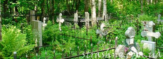 Бурьян на кладбище