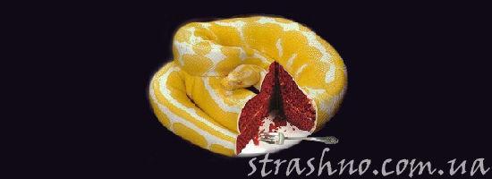 опасный торт от любовницы