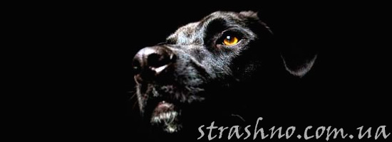 Призрак собаки