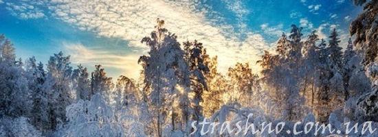 Зимнее небо в лесу