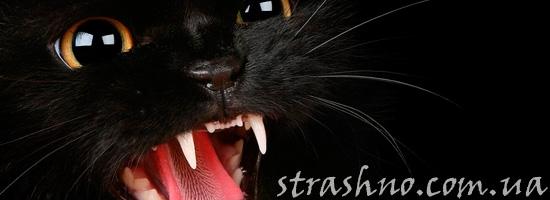 Рассерженная кошка