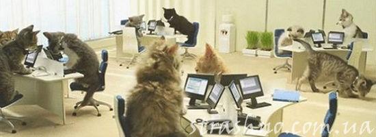коты на работе в бюро
