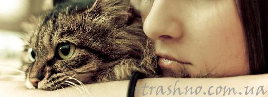 Мистическая история про кошку