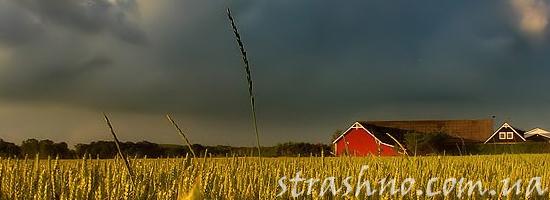 поле ферма