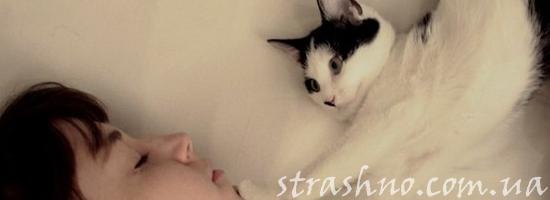пробуждение кошка девушка