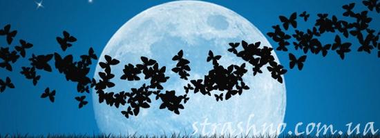 ночью луна бабочки