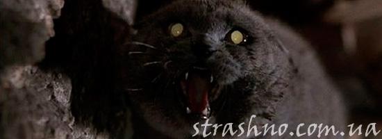 Страшилка про адскую кошку