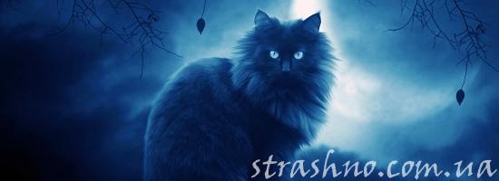 черная кошка ночь