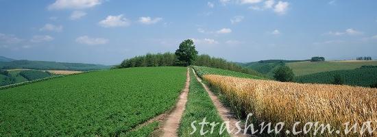 сельская дорога