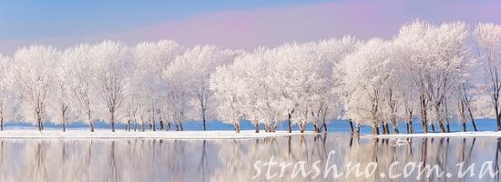 деревья зима