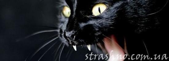 Явление чёрной кошки