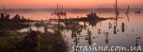 закат над болотом