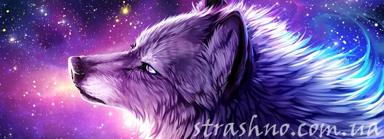 волк север зима