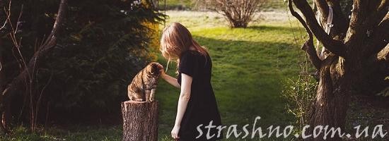 кошка на пеньке загород девушка