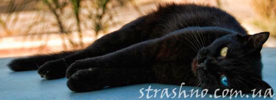 история про черного кота