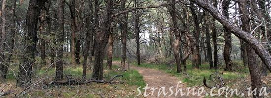 сухой лес
