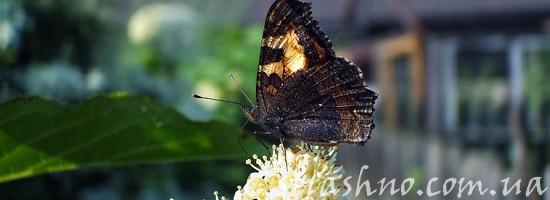лето бабочка деревня