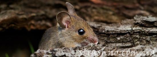 Мистическая история про мышку