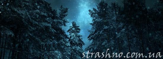 зима еловый лес