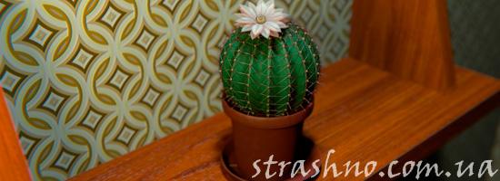 история с кактусом
