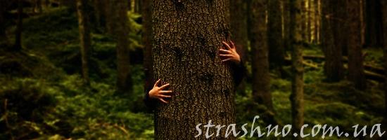 ствол дерева лес