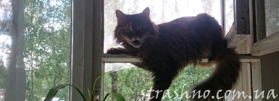 история про кошку