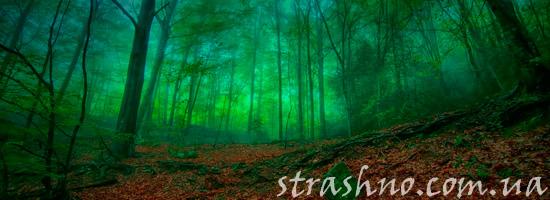 мистическая история леса