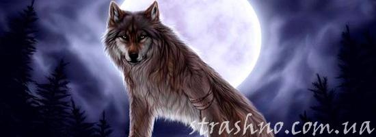 страшная история про волка оборотня
