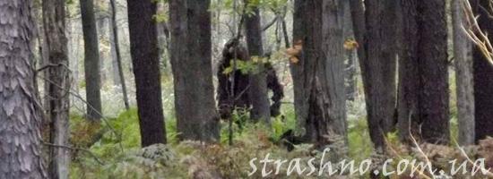 мистический случай в лесу