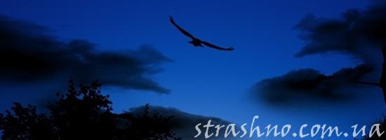 ночная птица