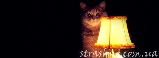 история про кота, который вел себя странно
